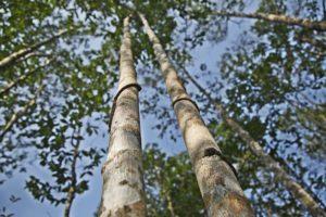AgarwoodViet_raw-material_05-min