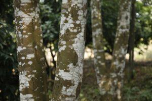 AgarwoodViet_raw-material_09-min